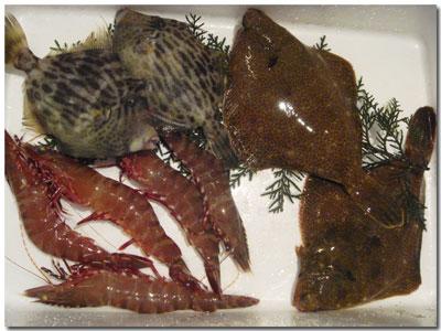 泉州地魚・みさき魚詰合せ5000